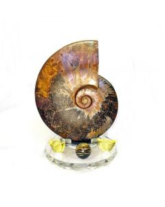AMMONITE BROWN FOSSIL WITH STAND